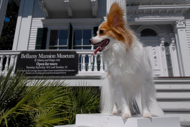 Pooch on the Porch 2011
